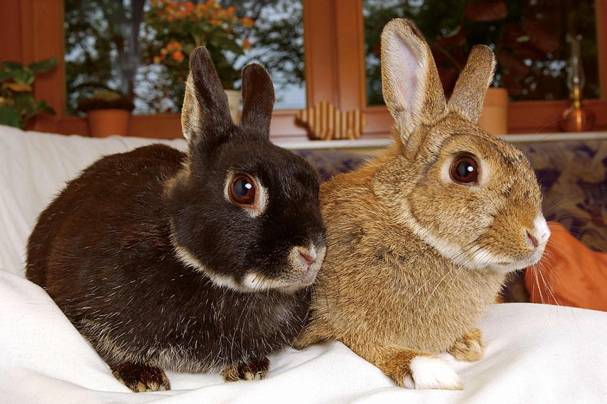 kaninchen drinnen