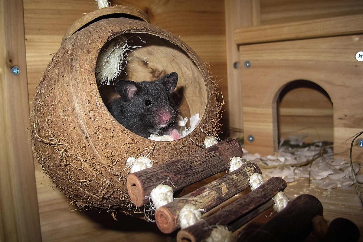hamster aktion