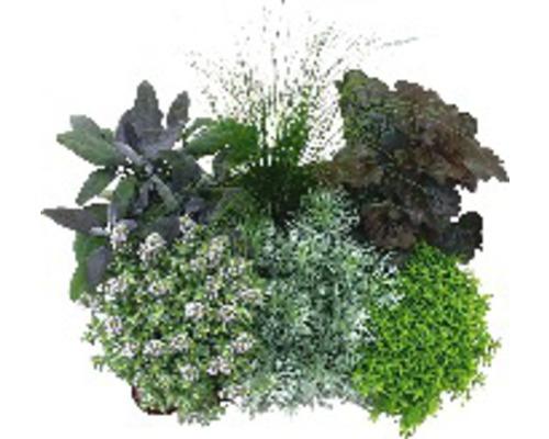 Différentes sortes d''herbes aux écouvillons pot Ø12cm assorties