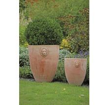 Buchsbaum FloraSelf H 25-30 cm Co 1 L (10 Stk)-thumb-4