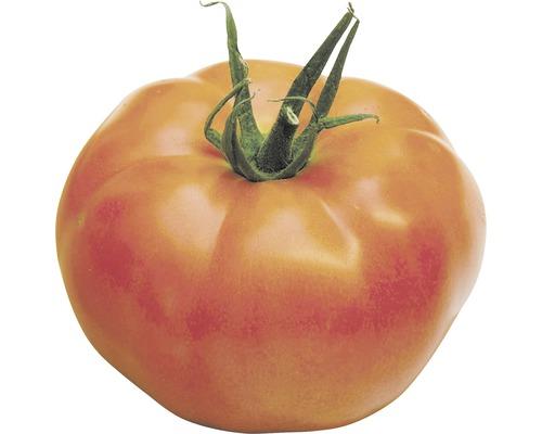 Tomate charnue FloraSelf Bio Lycopersicum esculentum var. esculentum ''St Pierre'' pot Ø 9 cm