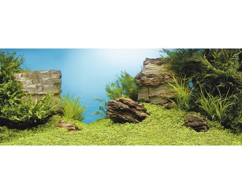 Poster pour paroi arrière Juwel plantes/rochers 150 x 60 cm