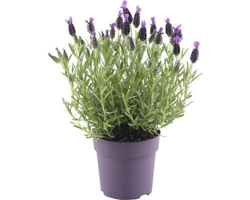 Plantes pour bac