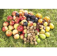 Ramasse-fruits système combiné GARDENA-thumb-21