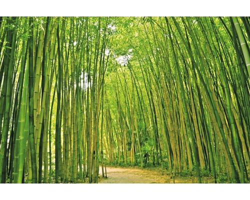 Papier peint photo intissé Bamboo Forest 350 x 260 cm