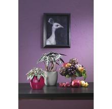 Pot de fleurs Soendgen Basel Fashion, céramique, Ø 13 H 12 cm, gris clair-thumb-1