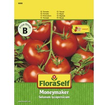 Semences de légumes FloraSelf, graines de tomates « Moneymaker »