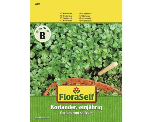 Graines de coriandre «annuelle» FloraSelf
