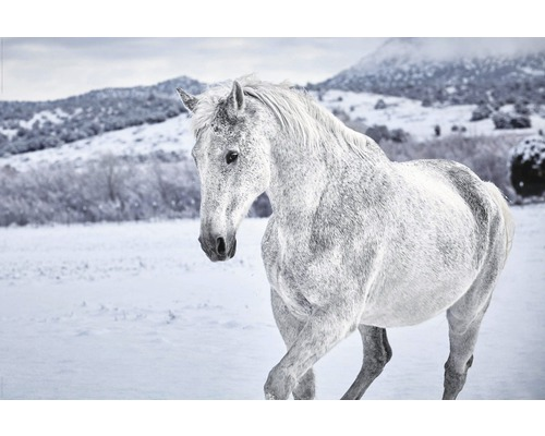 Poster White Horse 61x91,5 cm