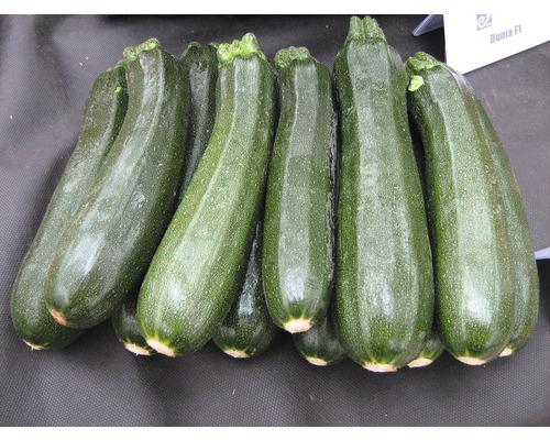Courgette verte Cucurbita pepo pot Ø 9 cm