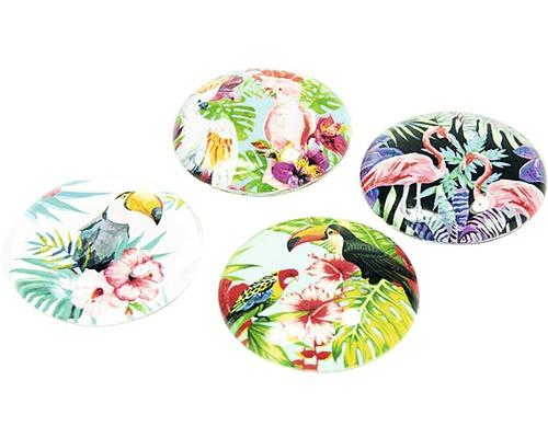 Aimants décoratifs ronds Oiseaux de paradis set de 4