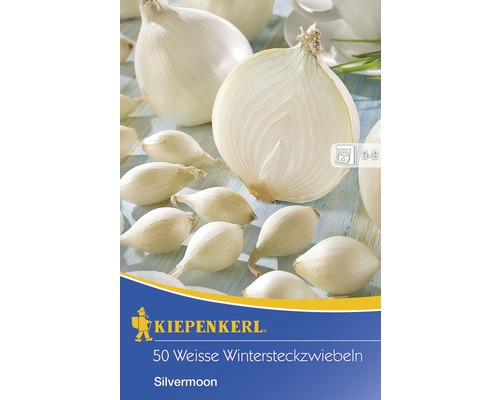 Oignons d''hiver Kiepenkerl ''Silvermoon weiß'' 50 pièces