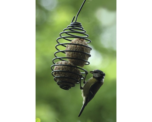 Support pour boule de graisses en forme de spirale, vert