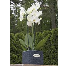 Vase à plantes Terrasoft Mino Gummi 25x25x25cm anthracite-thumb-1