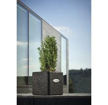 Vase à plantes Terrasoft Mino Gummi 25x25x25cm anthracite-thumb-2
