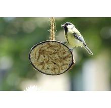 Ganzjahresvogelfutter 10 x 1/2-Kokosnüsse, 5 verschiedene Sorten-thumb-3