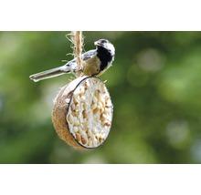 Ganzjahresvogelfutter 10 x 1/2-Kokosnüsse, 5 verschiedene Sorten-thumb-6