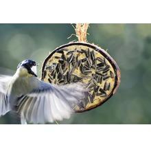 Ganzjahresvogelfutter 10 x 1/2-Kokosnüsse, 5 verschiedene Sorten-thumb-7