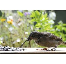 Ganzjahresvogelfutter Sonnenblumenkerne 20 kg-thumb-4