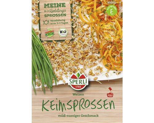 Graines de blé bio pour kit de culture de pousses vertes et de germes 3pièces