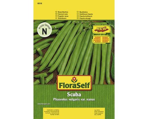Haricots nains ''Scuba'' FloraSelf semences de légumes