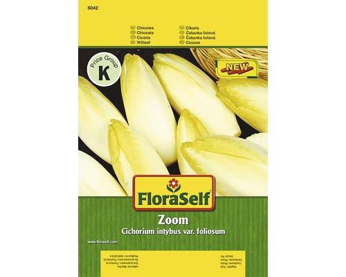 Chicoree ''Zoom'' FloraSelf semences de légumes