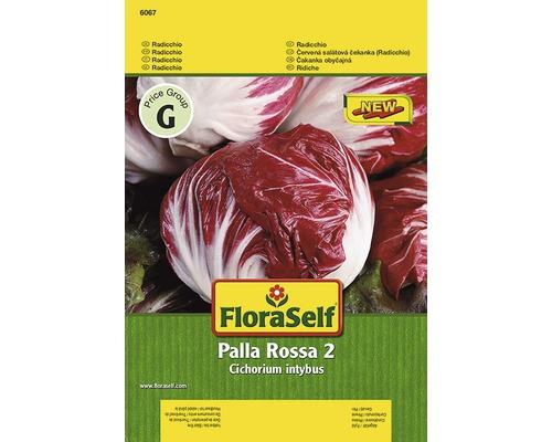 Radicchio ''Palla Rossa 2'' FloraSelf semences de légumes