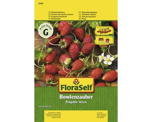 Fraise ''Bowlenz'' FloraSelf semences de légumes