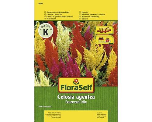 Celosia ''Feuerwerk'' FloraSelf semences de fleurs