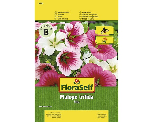 Iberis FloraSelf semences de fleurs