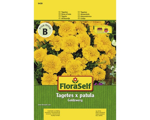 Tagetes ''Goldzwerg'' FloraSelf semences de fleurs