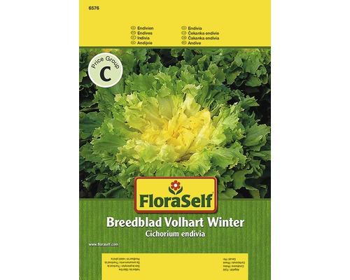 Endivie ''Breedblad'' FloraSelf semences de légumes