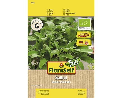 Bio-Sauge ''Salina'' FloraSelf semences de fines herbes