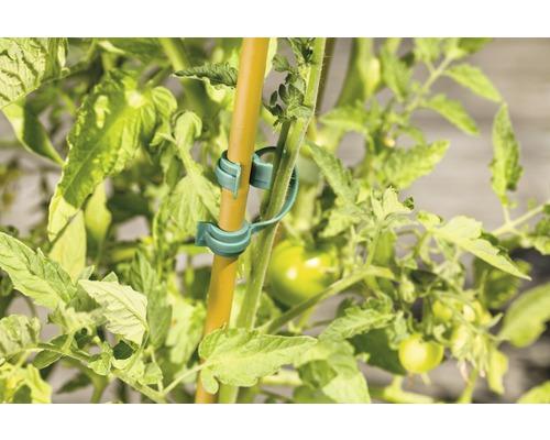 Clip pour plantes FloraSelf plastique 5 pièces