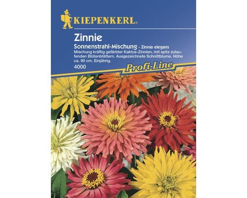 Semences de fleurs de zinnias Kiepenkerl «Mélange rayons de soleil»