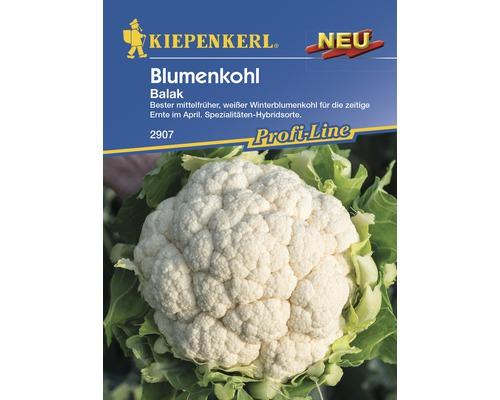 Graines de chou-fleur «Balak» Kiepenkerl