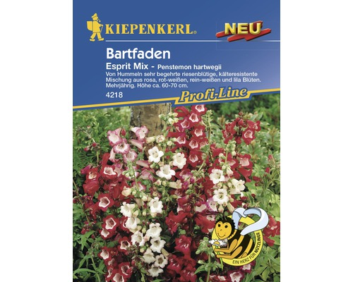 Graines de penstemon «Esprit Mix» Kiepenkerl
