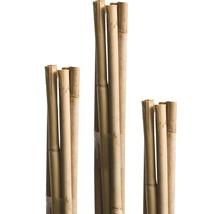 Tige en bambou FloraSelf H120cm Ø8mm marron 10 pièces-thumb-0