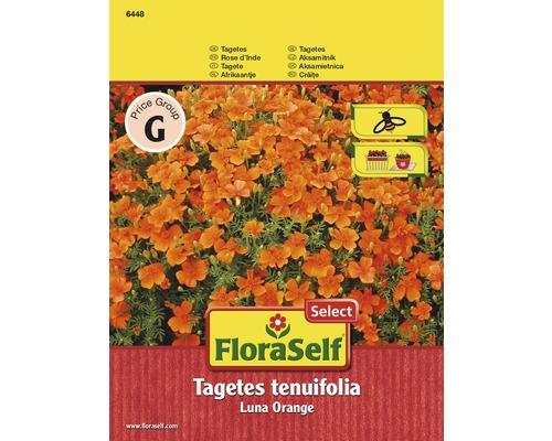 Tagète Luna Orange ''Tagetes tenuifolia'' semences de fleurs FloraSelf®