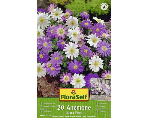 Bulbes FloraSelf anémone ''Blanda Mix'' 20 pièces