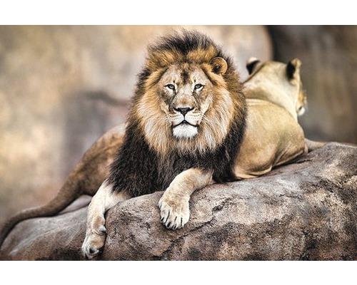 Panneau décoratif King of Pride 61x91 cm
