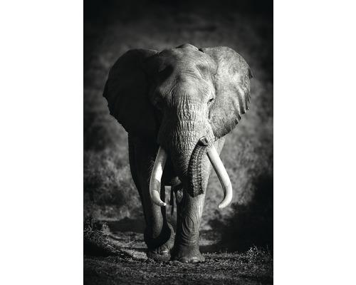 Panneau décoratif Large Elephant 61x91 cm