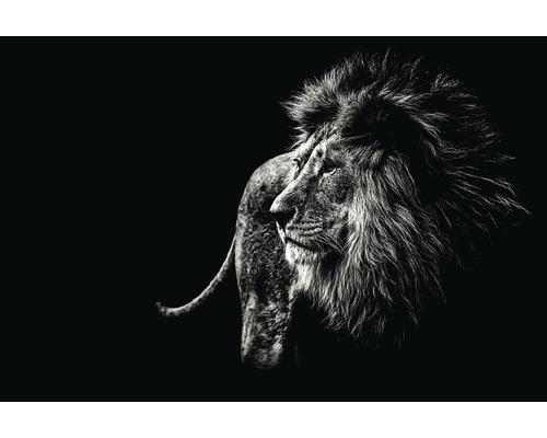 Panneau décoratif Lion Black&White 61x91 cm