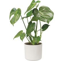 Pot de fleurs elho b. for soft, plastique, Ø 22 H 20 cm, blanc-thumb-2