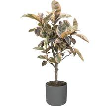 Pot de fleurs elho b. for soft, plastique, Ø 22 H 20 cm, anthracite-thumb-2