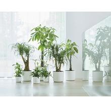 Pot de fleurs elho b. for soft, plastique, Ø 22 H 20 cm, blanc-thumb-3