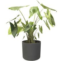 Pot de fleurs elho b. for soft, plastique, Ø 22 H 20 cm, anthracite-thumb-8