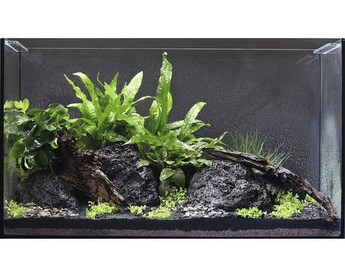 Pack de plantes aquatiques M pour aquarium de 60l 10pots