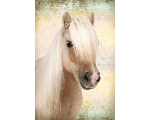 Poster Sweet Horse 61x91,5cm