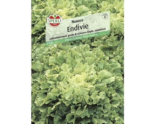 Semence de salade Endive «Nuance» Sperli